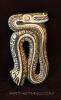 Snake Compact Didgeridoo designed